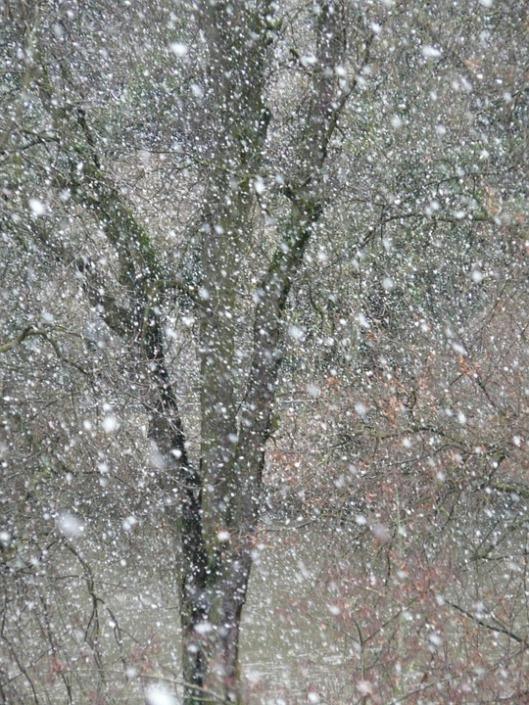 snowfall-16320_960_720