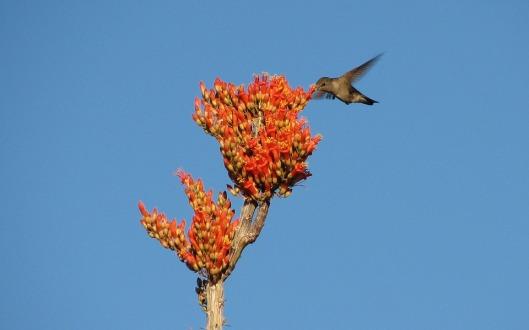 hummingbird-93472_960_720