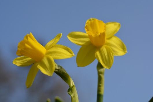 yellow-flower-301552_960_720