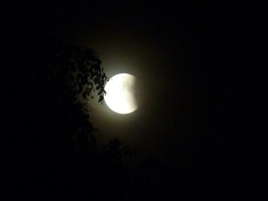 lunar-eclipse-599114_960_720