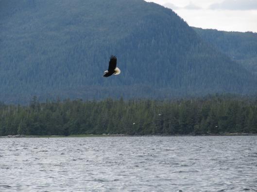 bald-eagle-18926_960_720