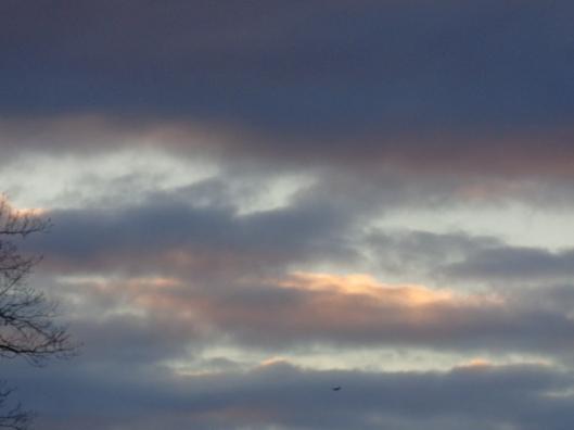 sky with bird