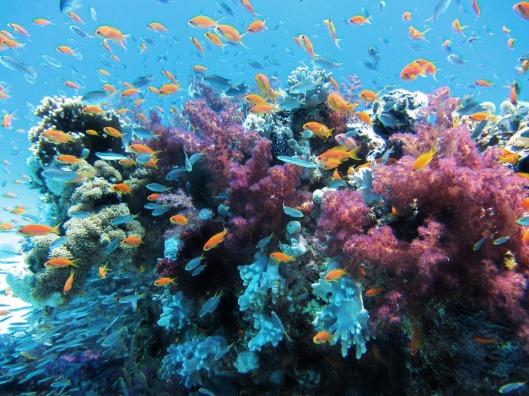 underwater-123282_960_720