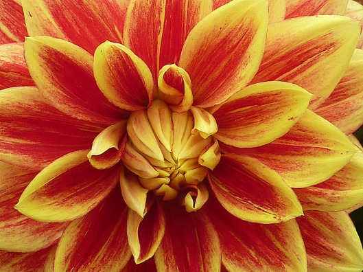 flower-1042310_960_720