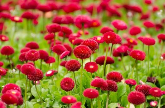 flower-275969_960_720