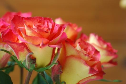 roses-1106331_960_720
