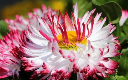 geese-flower-1328853_960_720