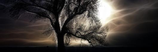 tree-1308055_1280