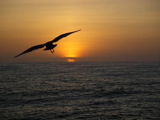 seagull-1103622_960_720