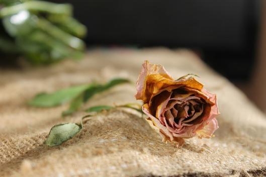 flower-1228762_960_720