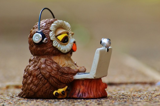 owl-947741_960_720