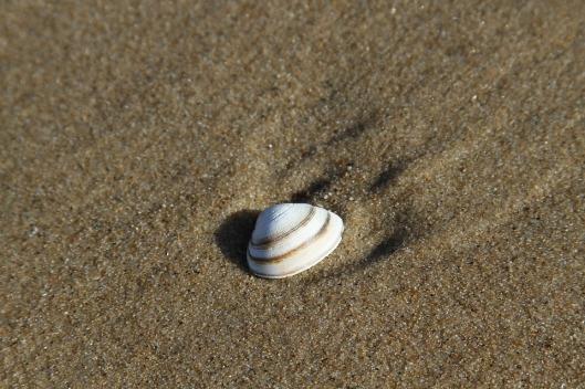 shell-1488863_960_720