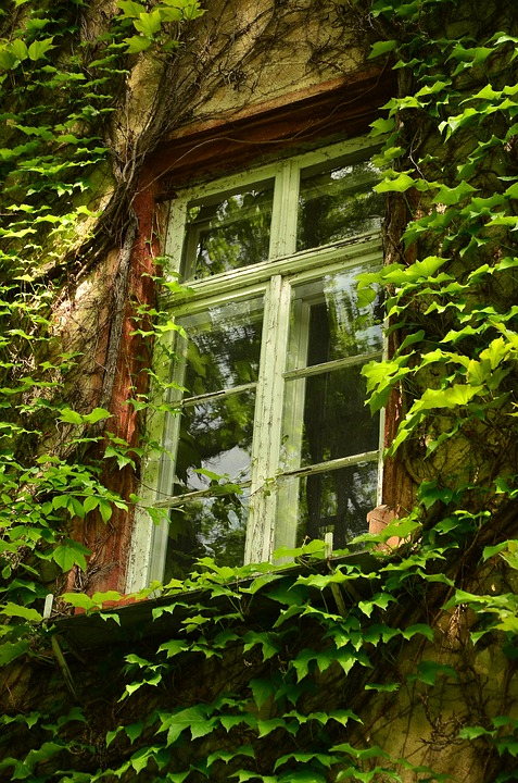 window-1433538_960_720