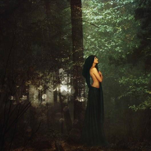 forest-1377550_960_720