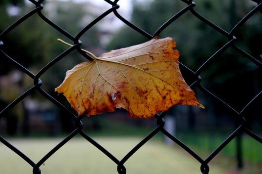dry-leaf-97461_960_720