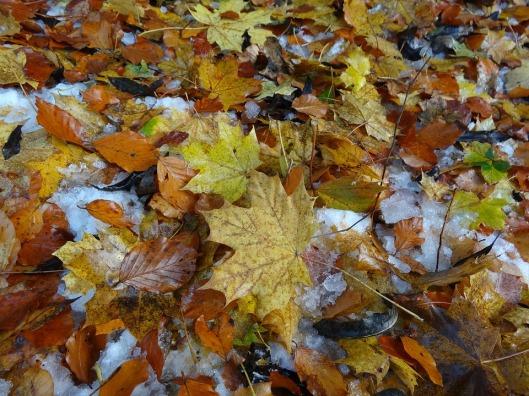 leaves-1157652_960_720