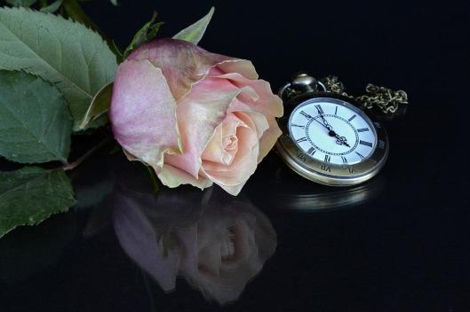 rose-1706447_960_720