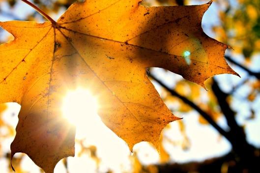 sun-1717412_960_720