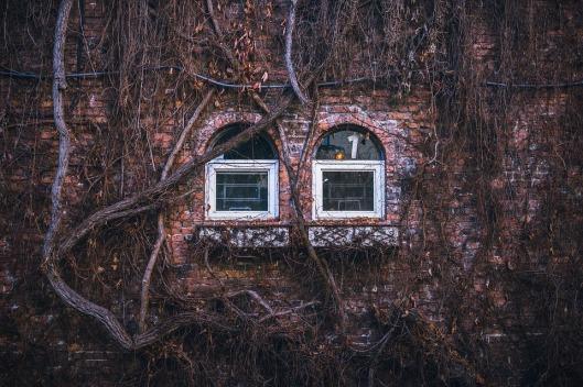 windows-1209555_960_720