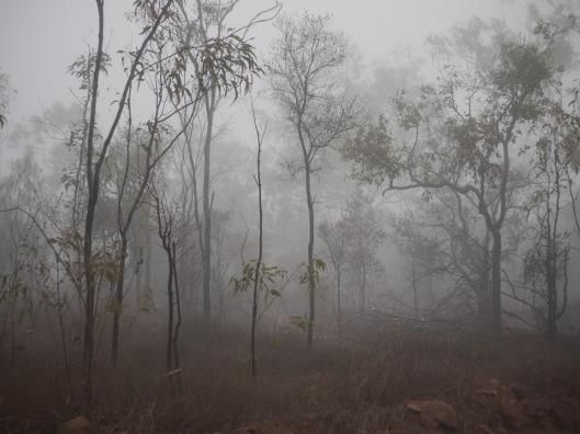 fog-1044094_960_720