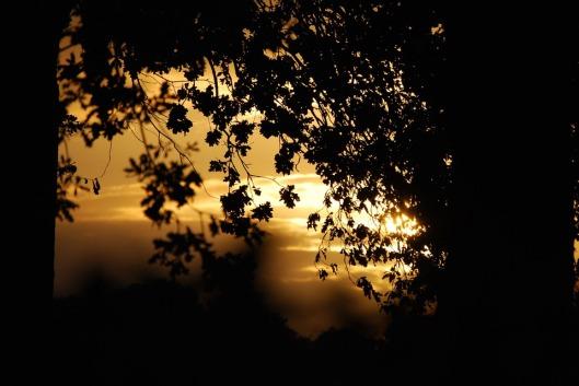 leaves-766959_960_720