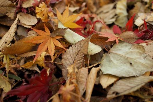 leaves-984544_960_720