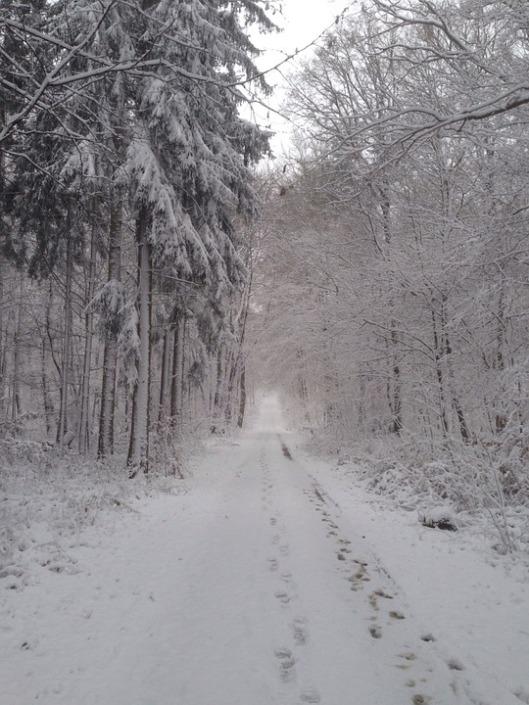winter-977777_960_720