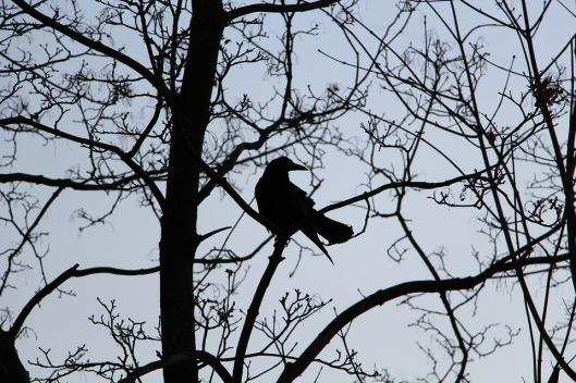 bird-1839638_960_720