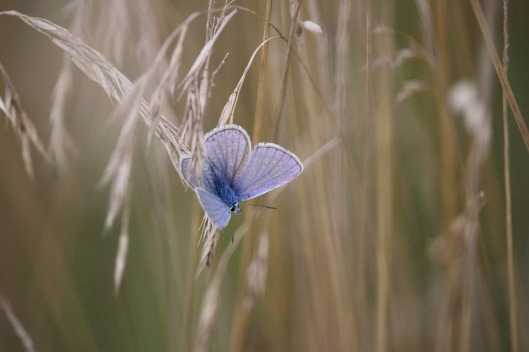 butterfly-908701_960_720