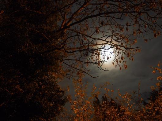 super-moon-1827567_960_720