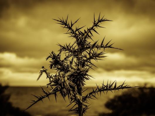 thorns-2013825_960_720