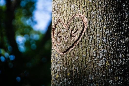 tree-868874_960_720
