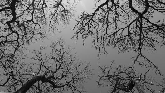 trees-1406760_960_720