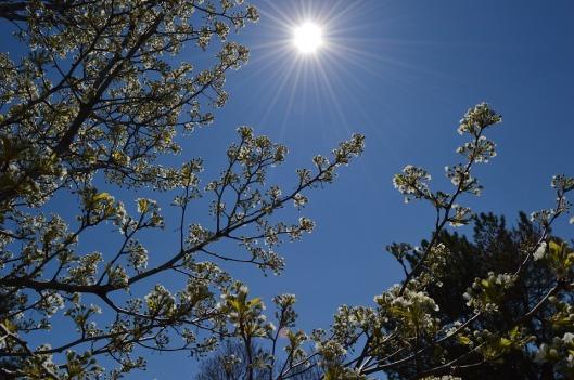 spring-1409373_960_720